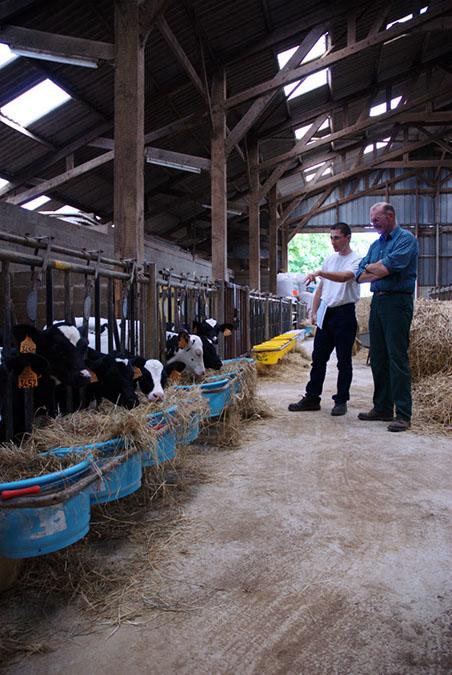 Conseil en élevage bovin et caprin