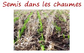 semis chaumes